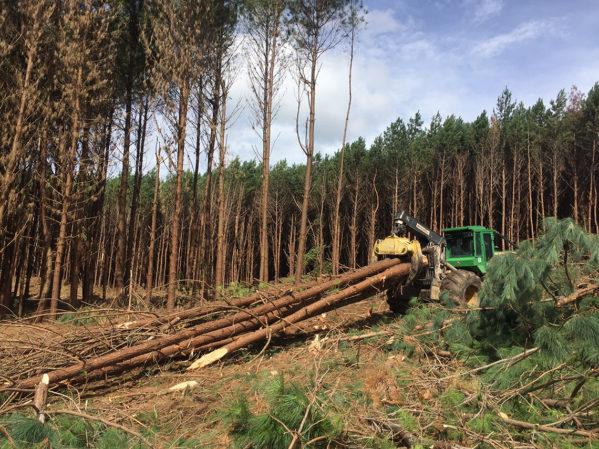 Arraste de árvores inteiras até a beira do talhão com Skidder2