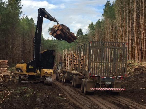 Carregamento do caminhão com trator com garra florestal2
